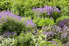 Different purple flowers in Regent Park in London. UK Royalty Free Stock Image