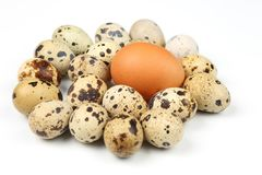Different quail and chicken eggs lie on white background Royalty Free Stock Photos