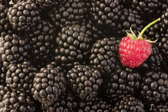 Different - raspberry  and blackberries Stock Photos