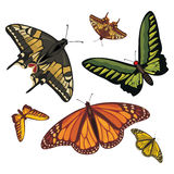Different realistic butterflies Royalty Free Stock Photography