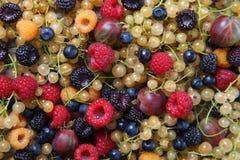 Different ripe berries Stock Photo