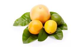 Different ripe citrus fruit. Stock Images