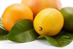 Different ripe citrus fruit. Royalty Free Stock Photo