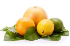 Different ripe citrus fruit. Stock Photos