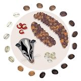 Different Roasted Coffee Bean with Civet Cat Stock Image