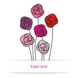Different roses Stock Images