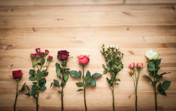 Different  roses on wooden background Stock Image
