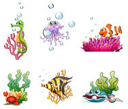 Different sea creatures Royalty Free Stock Photography