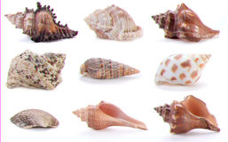 Different sea shells Stock Photos