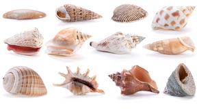 Different sea shells Royalty Free Stock Image