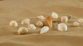 Different sea shells on beach sand, rotation stock video footage