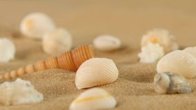 Different sea shells on beach sand, rotation stock video