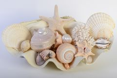 Different sea shells stock images