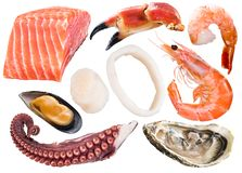 Different seafood pieces on white background. File contains clip royalty free stock photo