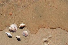 Different seashells on a beach sand Stock Photos