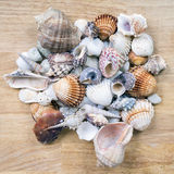Different seashells piled together like a background. Stock Photos