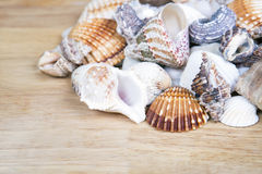 Different seashells piled together like a background. Royalty Free Stock Photography
