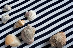 Different seashells on striped dark blue with white cloth Royalty Free Stock Photography