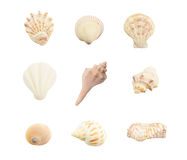 Different seashells on white background Royalty Free Stock Photos