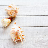 Different seashells on white boards Royalty Free Stock Photo
