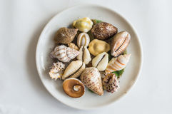 Different seashells in white plate. Different seashells in a white plate on a white background Royalty Free Stock Photography