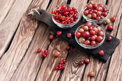 Different seasonal berries Royalty Free Stock Image