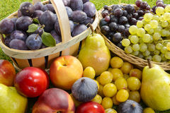 Different seasonal fruits,. Plums, pears, grapes stock photo