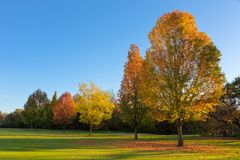 Different shades of Autumn Royalty Free Stock Image