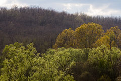 Different Shades of Colors in the Trees Royalty Free Stock Photo