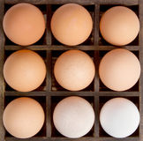 Different shades of eggs,concept diversity. Royalty Free Stock Images
