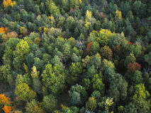 Different shades of green. A forest seen from above with trees of different shades and types Royalty Free Stock Images