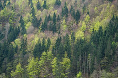 Different shades of green. In an alpine forest royalty free stock photography