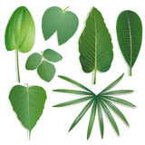 Different shape of leaves Set 2 Royalty Free Stock Photo