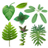 Different shape of leaves royalty free illustration