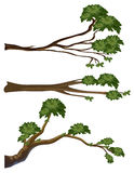 Different shapes of branches Stock Photography