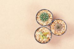 Different shapes of cactus in small pot. On brown background, decoration plant, top view Stock Images