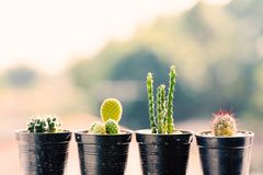 Different shapes of cactus in a small pot. Decoration plant Stock Photography