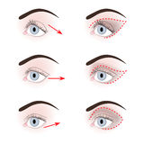 Different shapes of eyelids Royalty Free Stock Photo