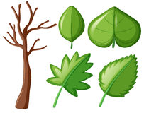 Different shapes of green leaves. Illustration Stock Photo