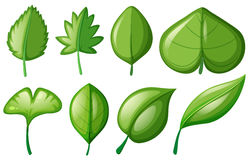 Different shapes of leaves. Illustration Royalty Free Stock Photo