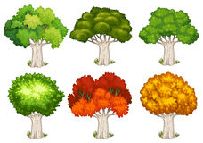Different shapes of trees Stock Photo