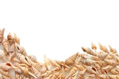 Different shells background Stock Photo