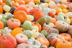 Different size of decorative pumpkins Stock Photography