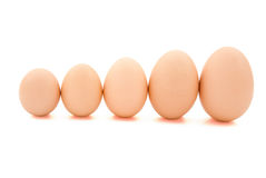 Different size eggs. Line up with clipping path Royalty Free Stock Photos