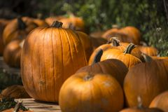 Pumpkins in shadows Royalty Free Stock Photography