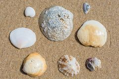 Various seashells on the sand of a beach. Different sized and different looking seashells draped on the sand of a beach stock photos