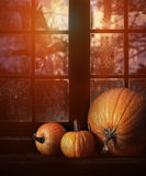Different sized pumpkins in window Stock Image
