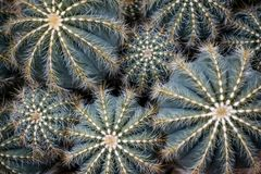 Different Sized Succulents, Cactus with Pricklies stock image