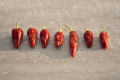 Different sizes of chilli pepper Stock Photos