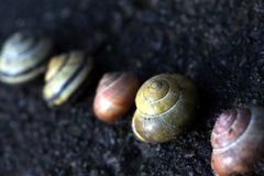 Different snail houses 5 Royalty Free Stock Photography